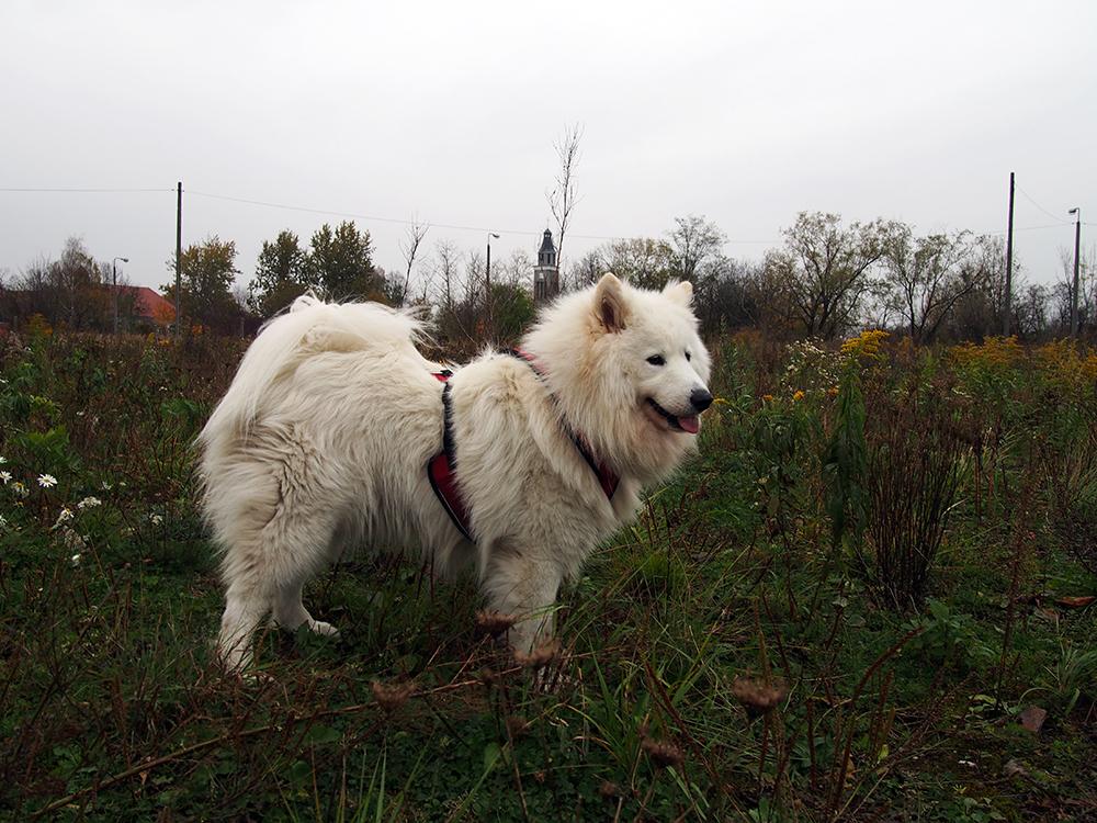 pies z hodowli 4