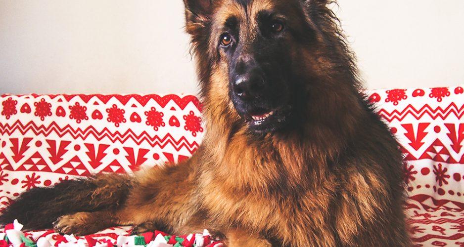 prezent dla psa na święta