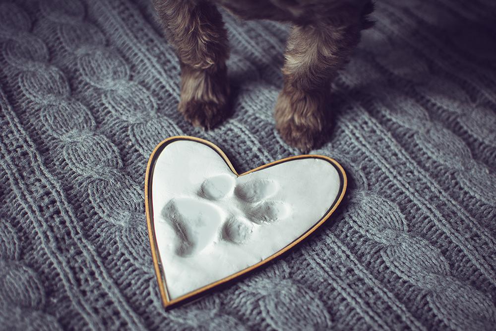 prezent dla psa 3