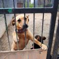 pomoc dla psów na święta