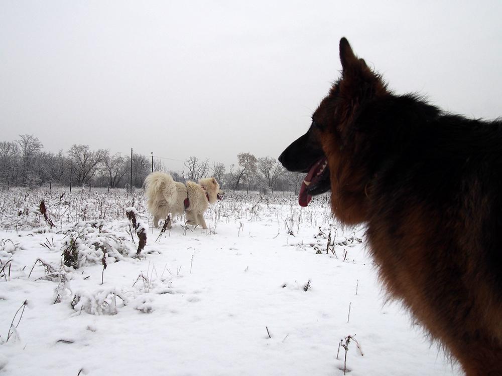 zwyrodnienie stawów u psa 3