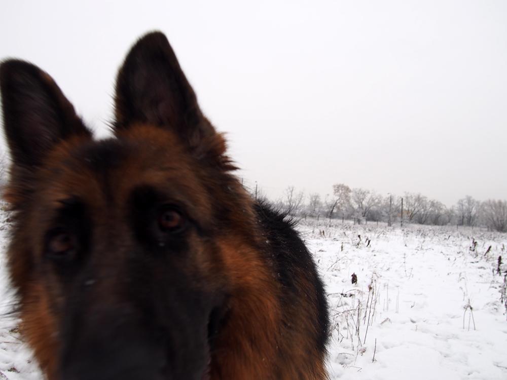 zwyrodnienie stawów u psa 7