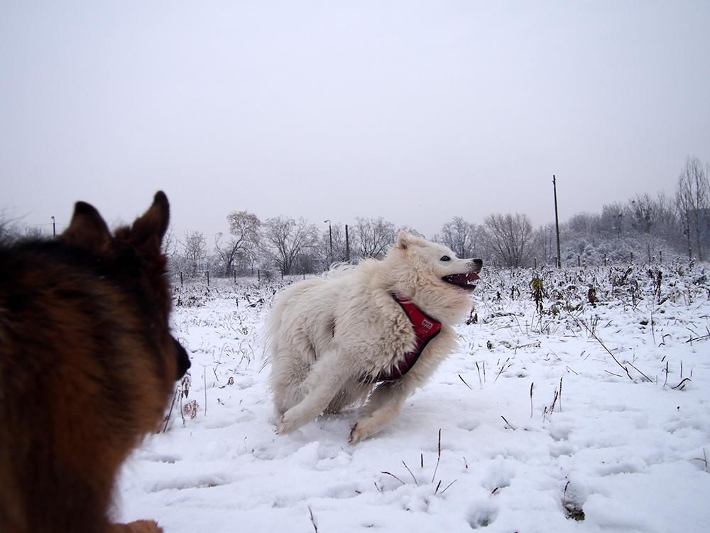 zwyrodnienie stawów u psa 6