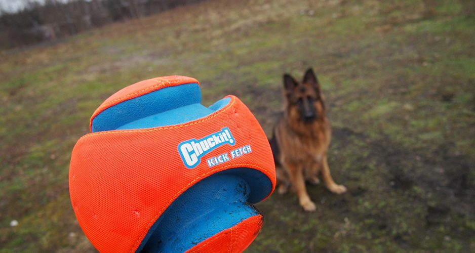 piłka dla psa chuckit