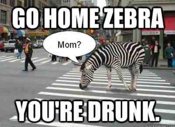 udomowienie psa zebra meme