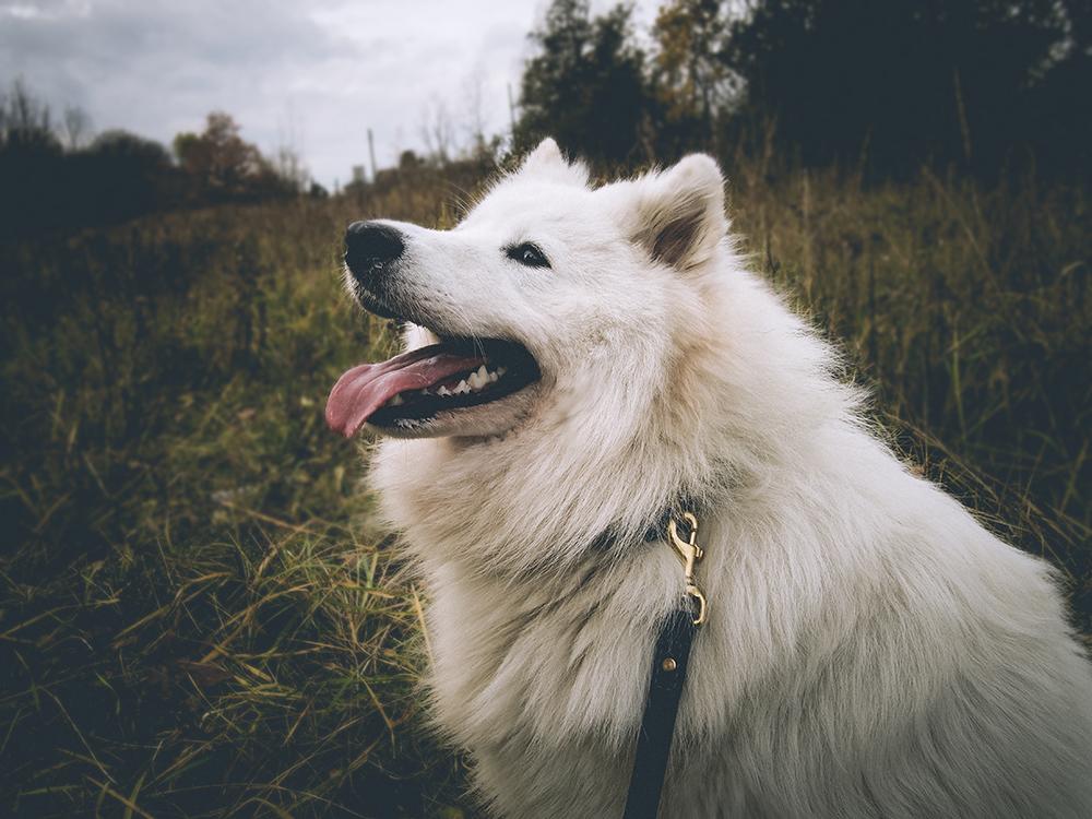 Pawesome smycz dla psa