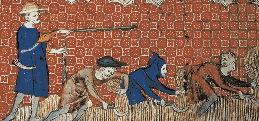 udomowienie psa rolnictwo