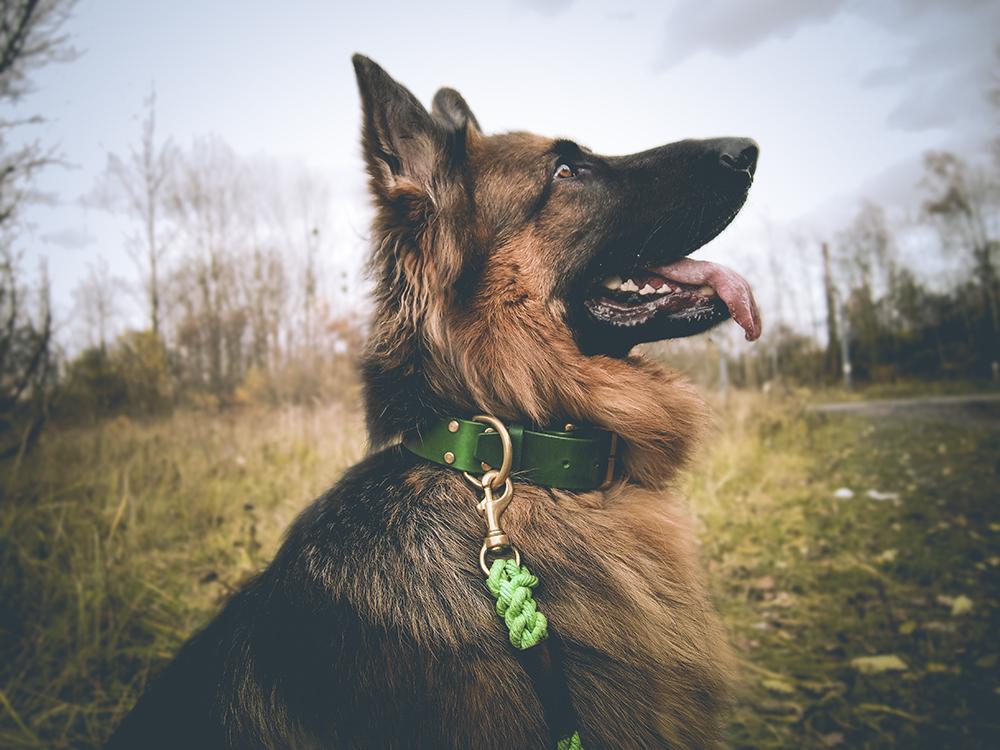 Pawesome obroża dla psa