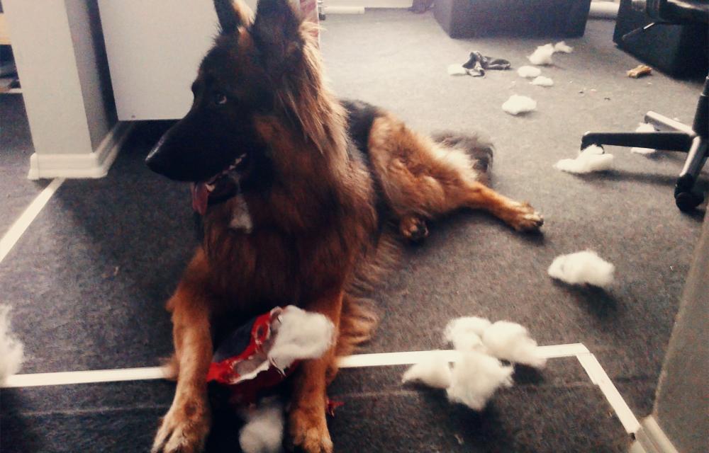testowanie produktów na psach recenzje
