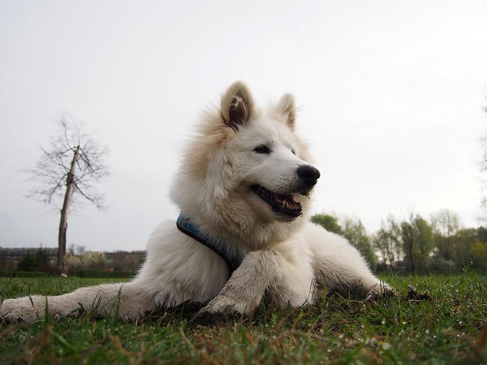 mój pies miał godne życie