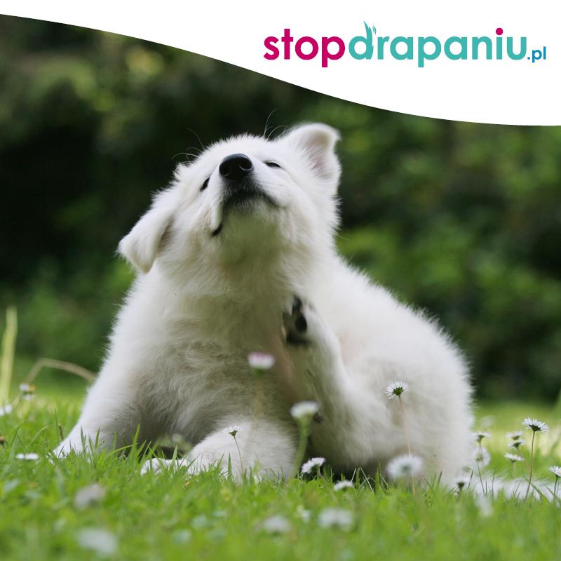 Stop Drapaniu