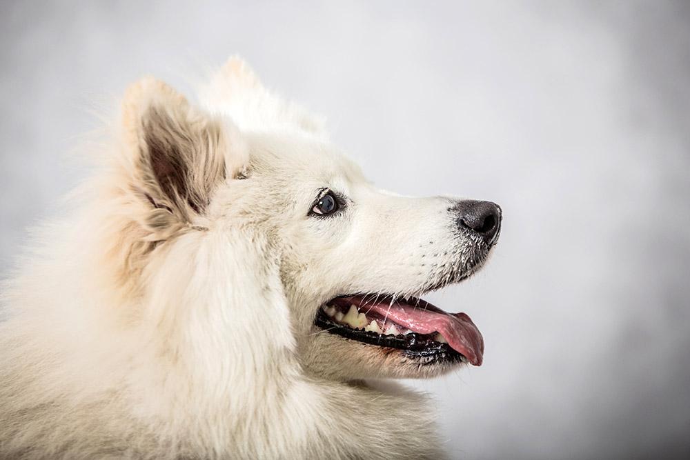pies w mieszkaniu kontra pies w domu