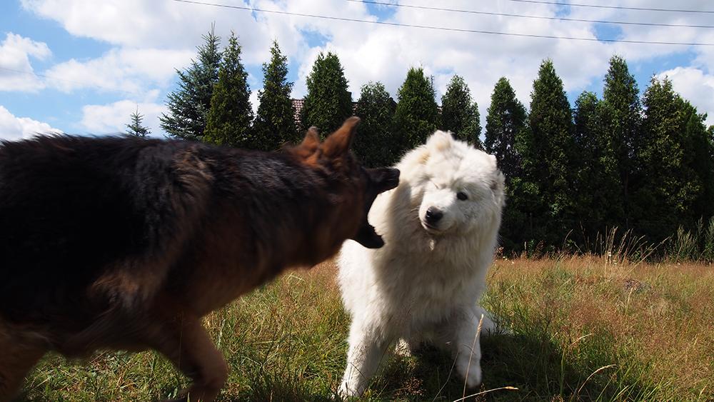 psie urodziny