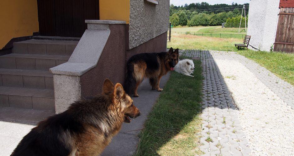 przeprowadzka z psem