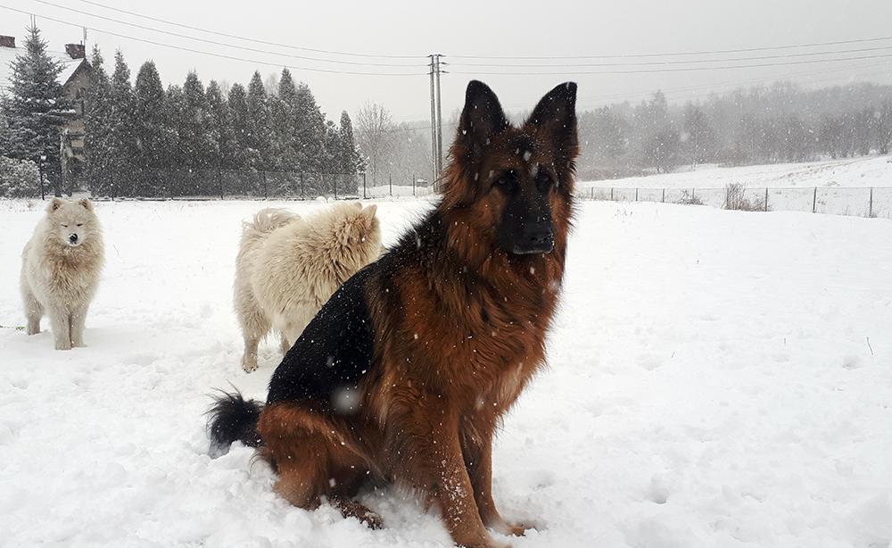 najlepszy pies
