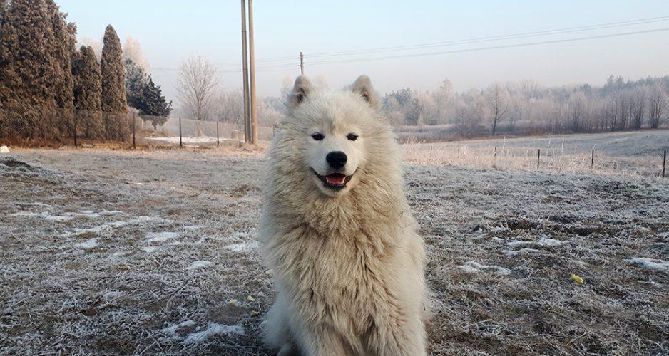 aklimatyzacja psa