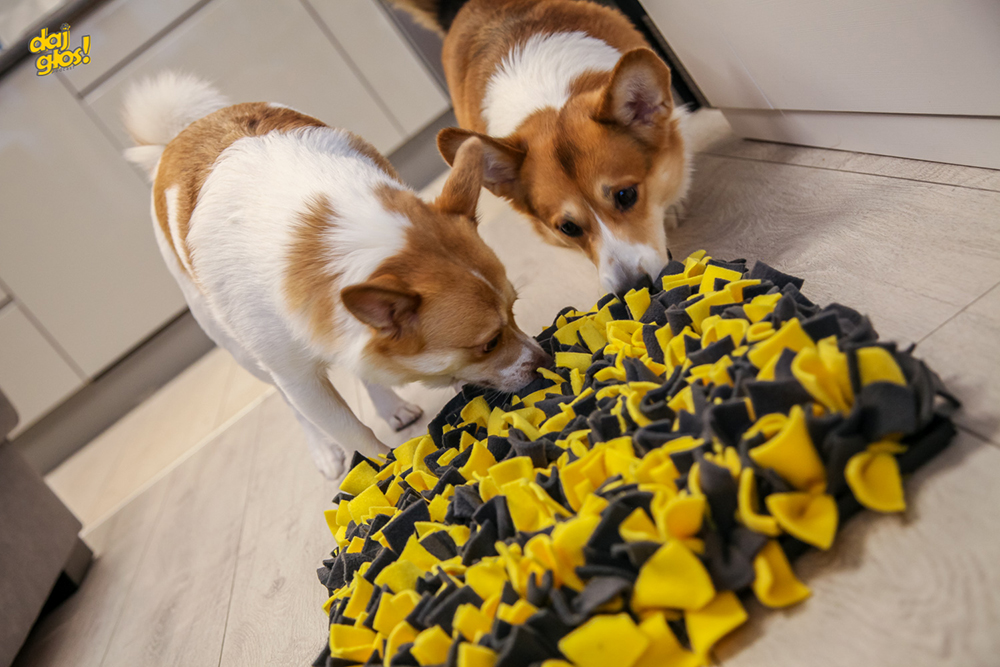 pomagamy psom