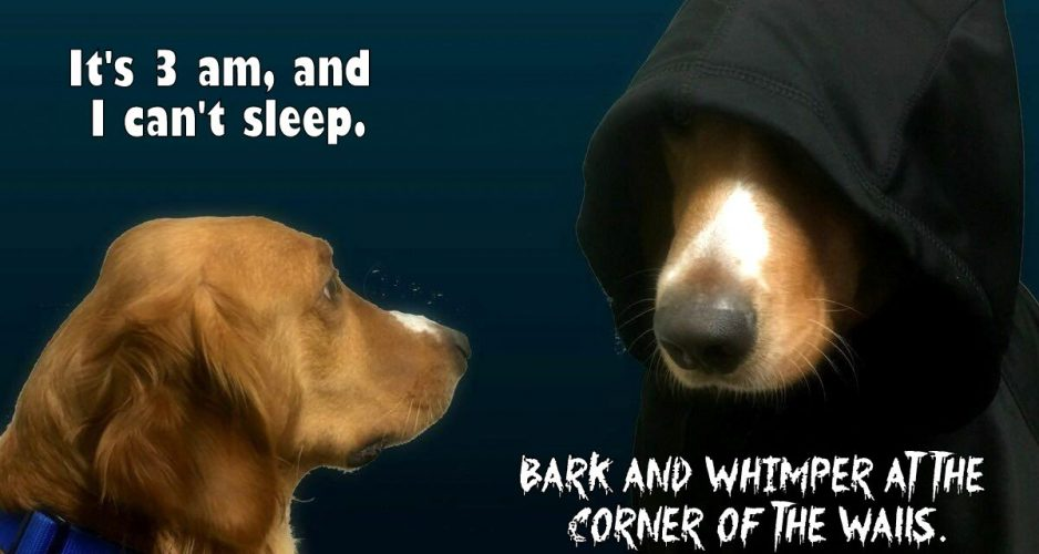 psie internety