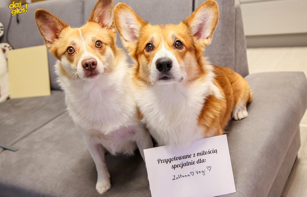 maty węchowe psia firma