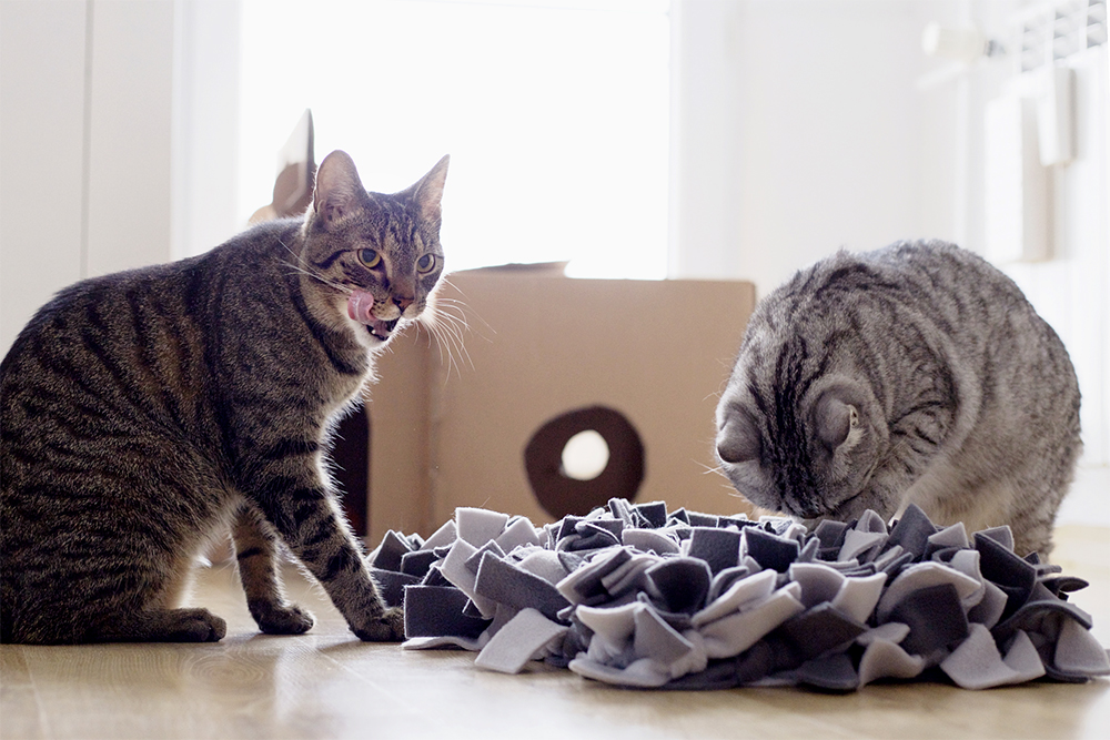 mata węchowa dla kota
