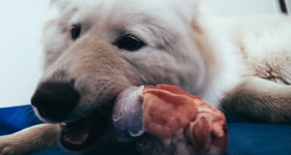 jak wybrać karmę dla psa