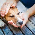 śmierć psa i żałoba