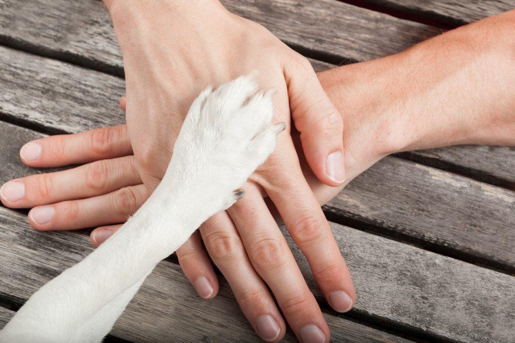 śmierć psa szacunek
