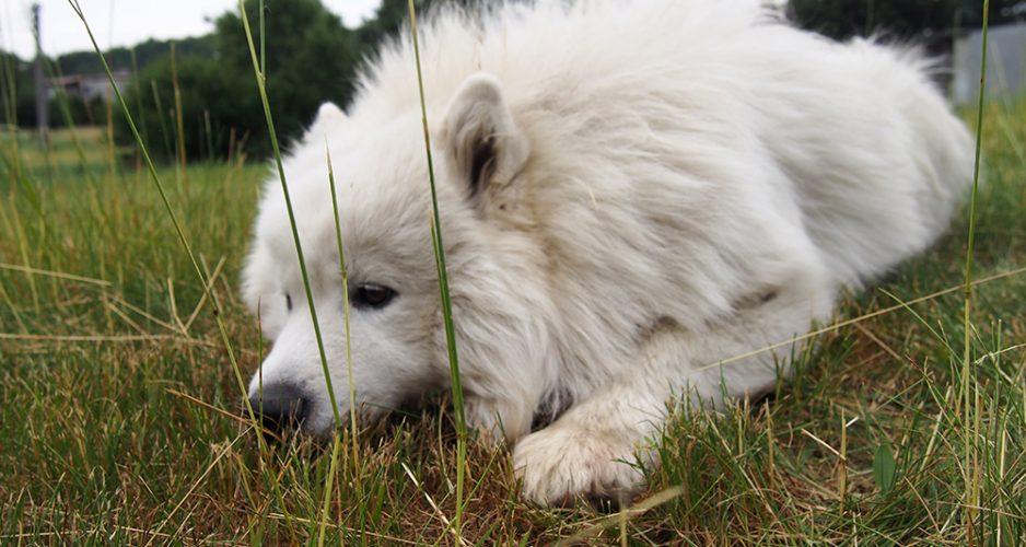 problemy wychowawcze psa szczeniak Lempo