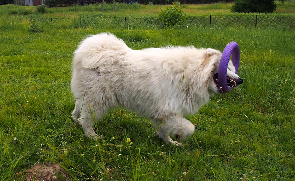 problemy wychowawcze psa szczeniak