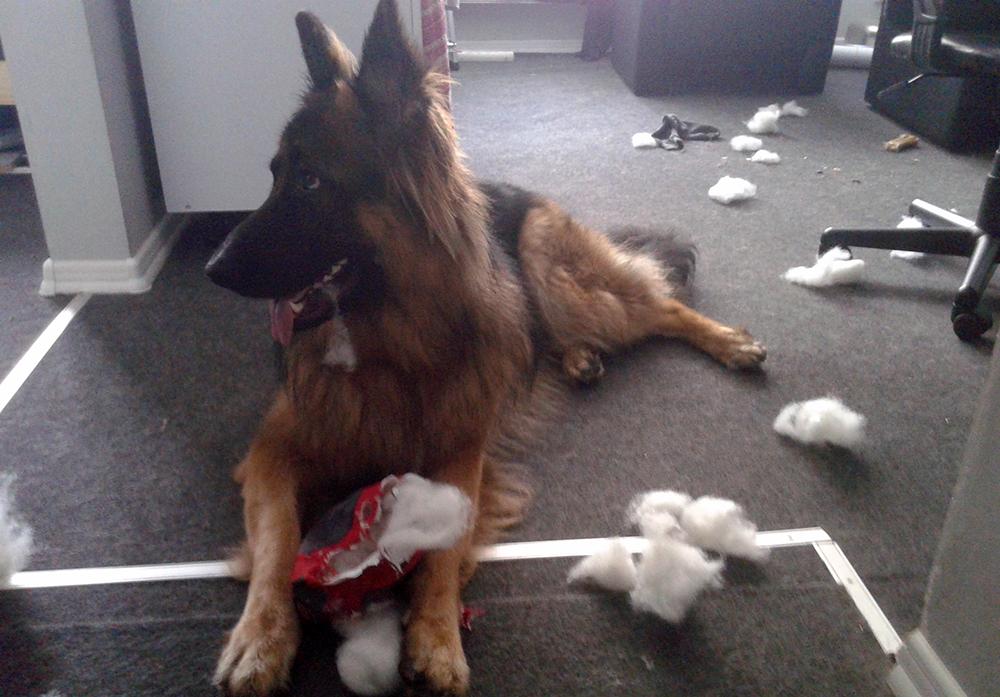 co robimy z psem w brzydką pogodę owczarek