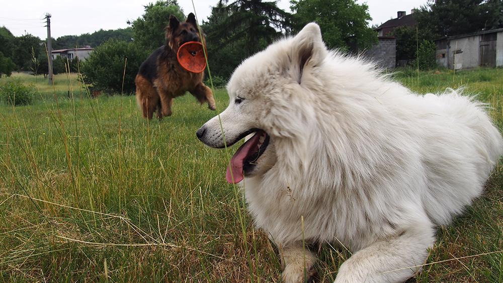 strach u psa pies się boi