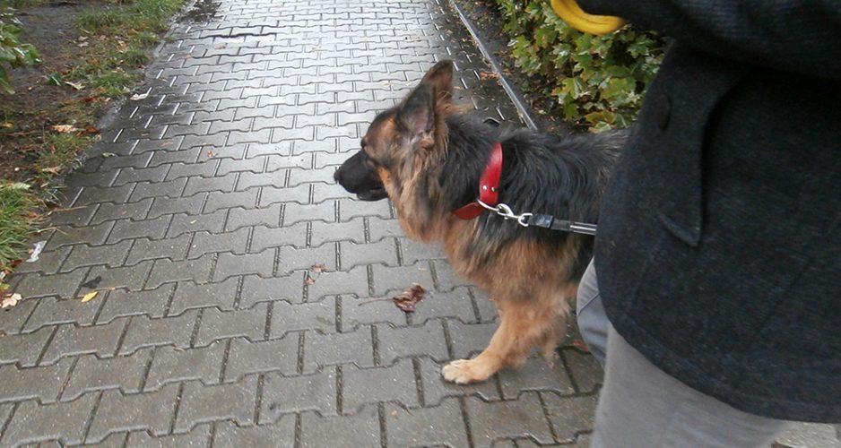 co robimy z psem w brzydką pogodę