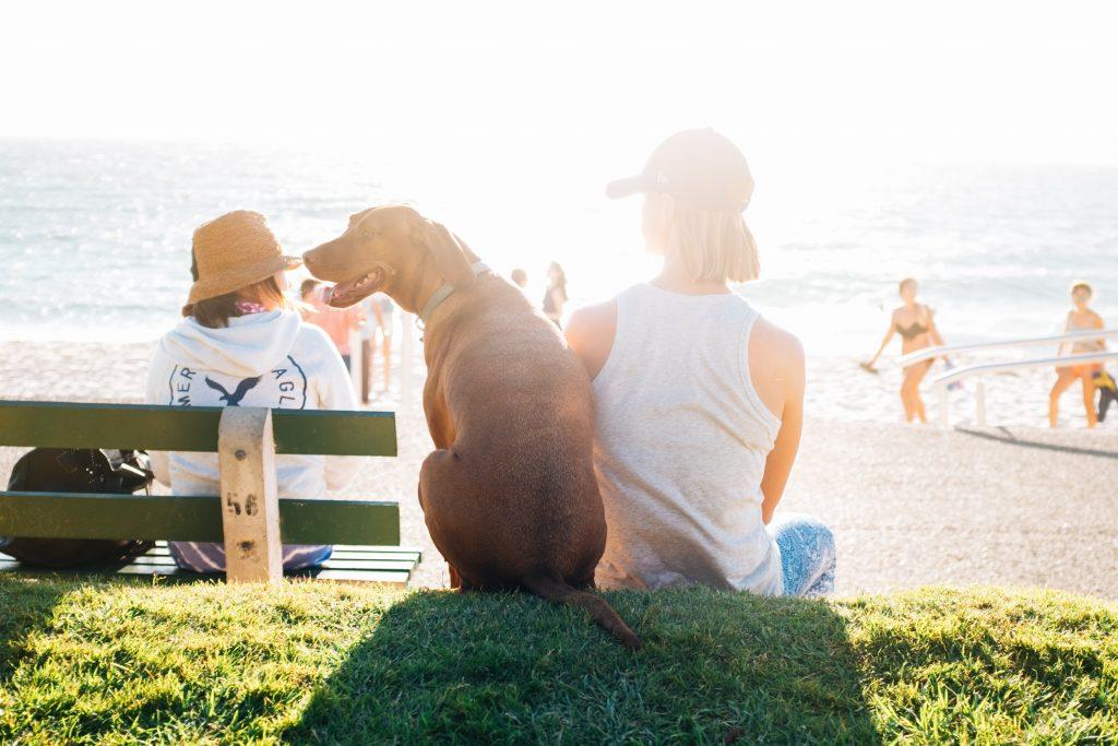chcę mieć psa czy to dobry pomysł problemy