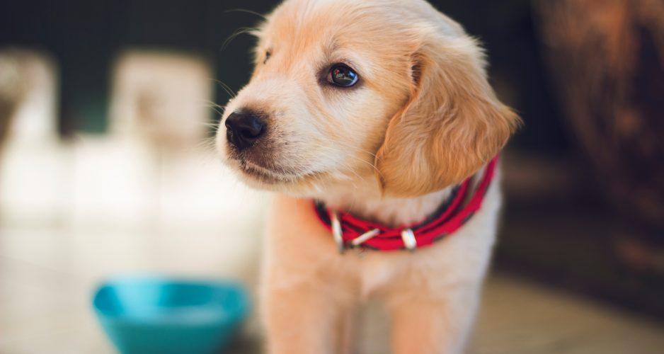 akademia życia z psem