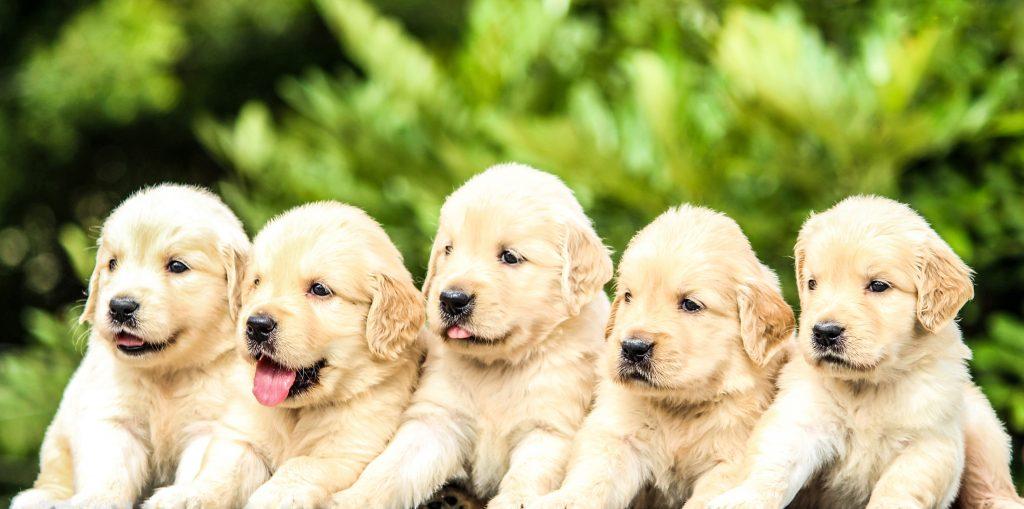 akademia życia z psem jak żyć z psem
