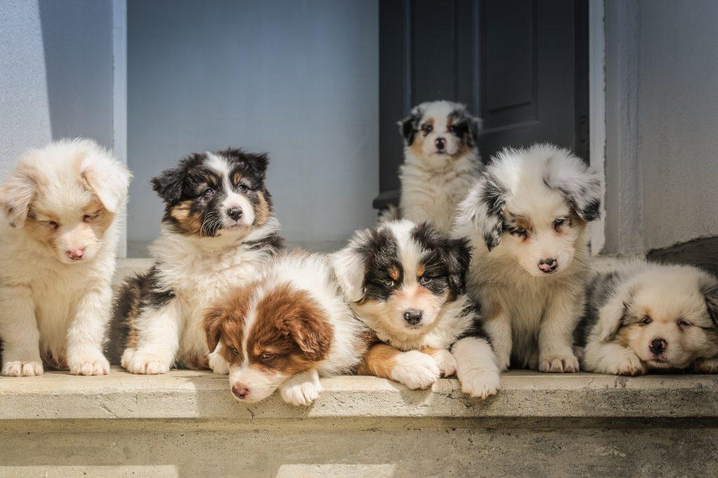 akademia życia z psem wychowanie psa