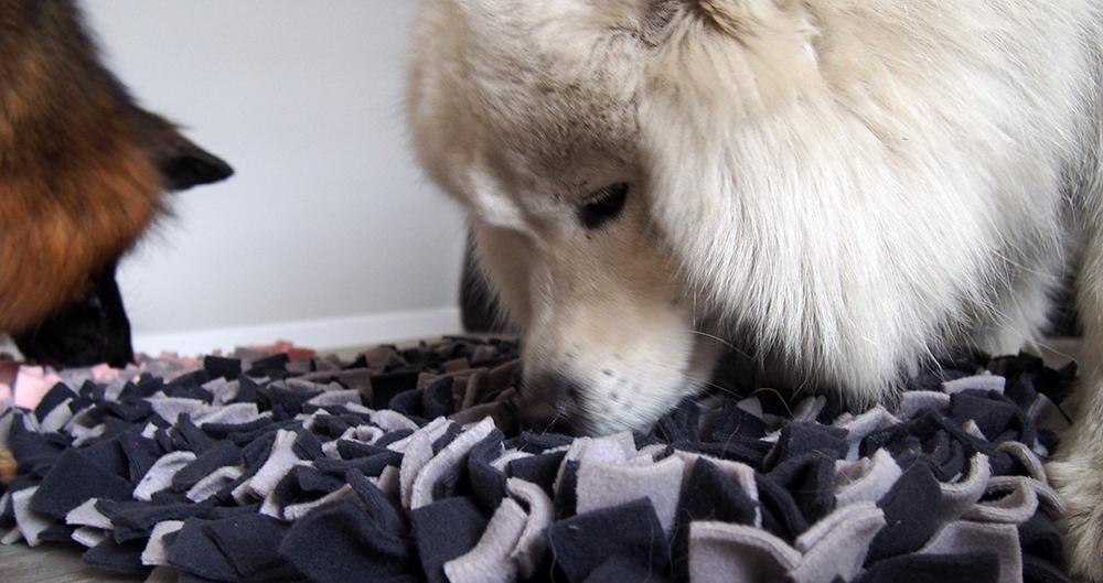 77 pet food dla psa owczarek samoyed