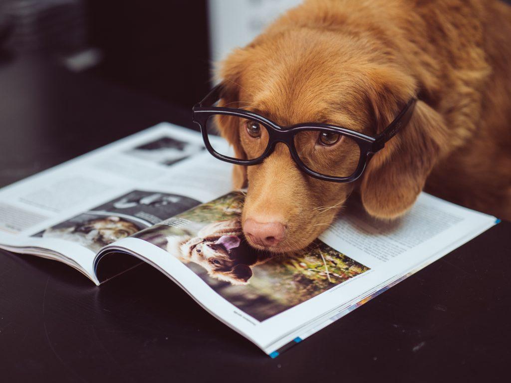 płeć psa czy ma znaczenie jak wybrać