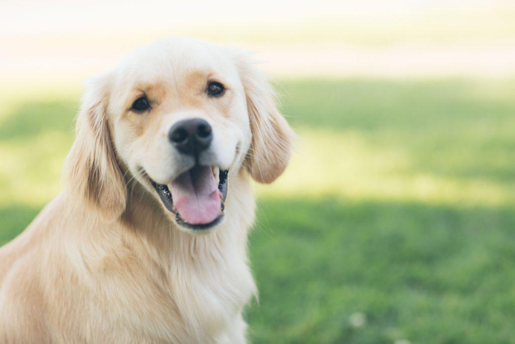 płeć psa czy ma znaczenie samiec