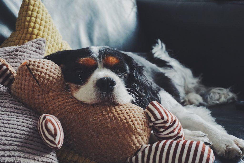 wyprawka dla psa zabawka
