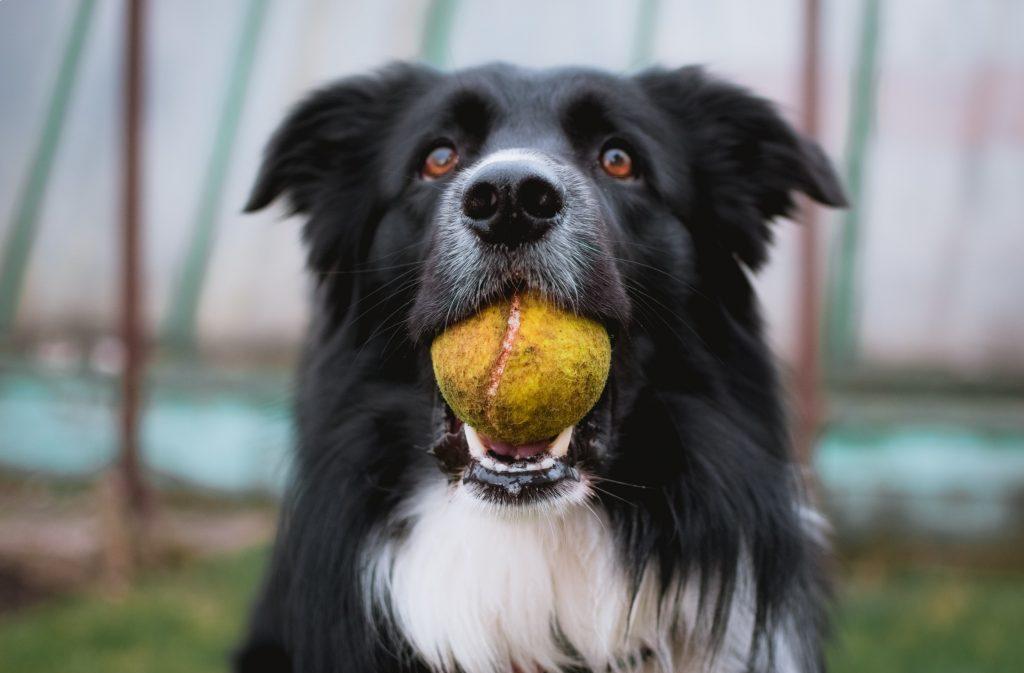 wyprawka dla psa piłka