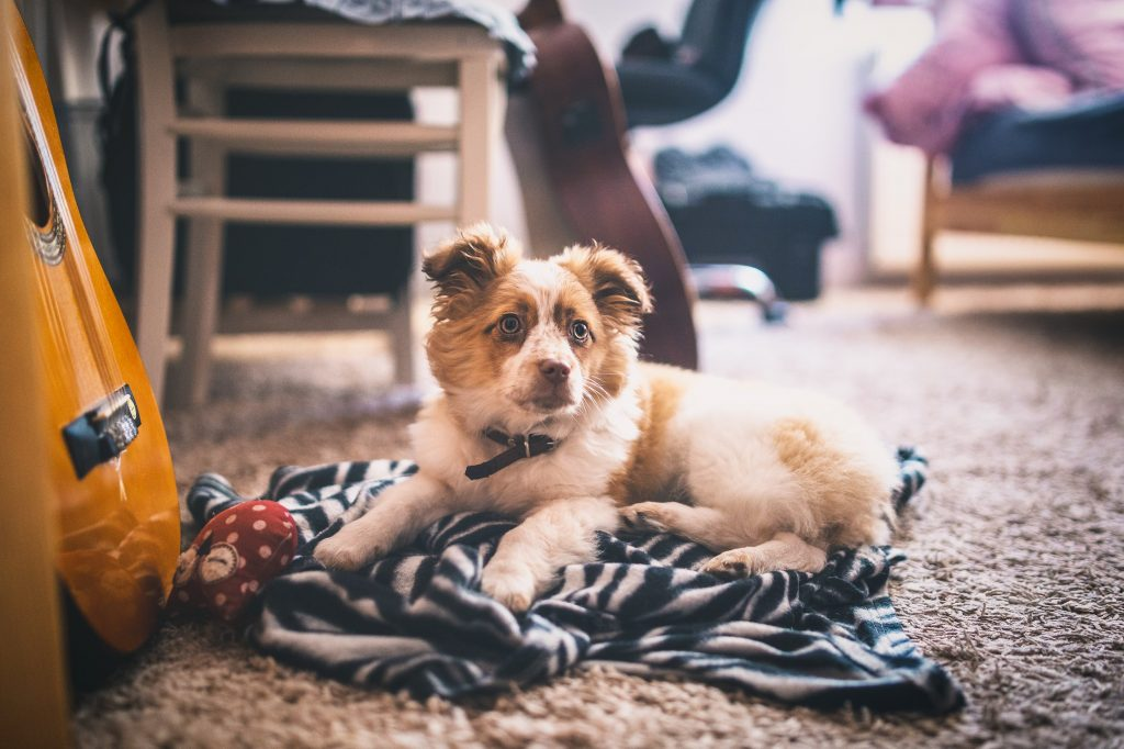 dramat zwierząt domowych książka o psach