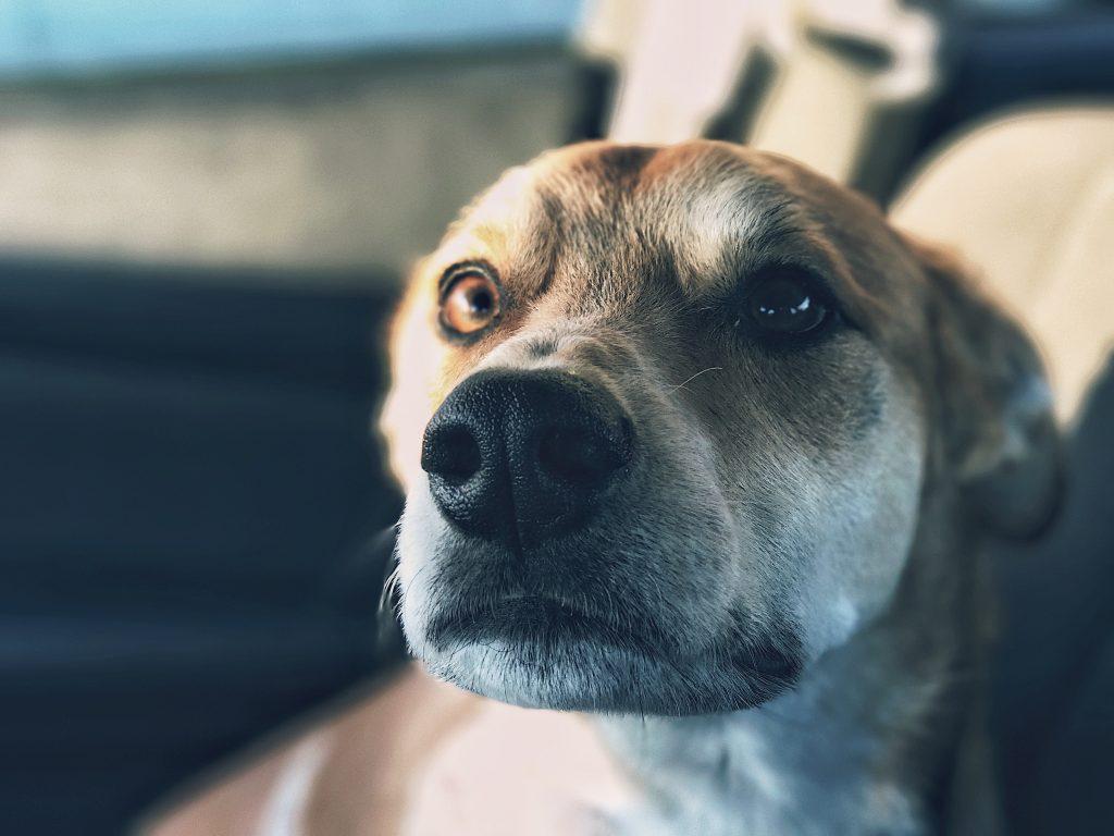 pierwszy dzień psa w nowym domu pies