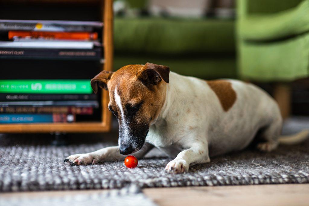 dramat zwierząt domowych o psach
