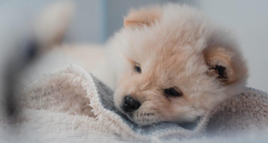 pierwszy dzień psa w nowym domu