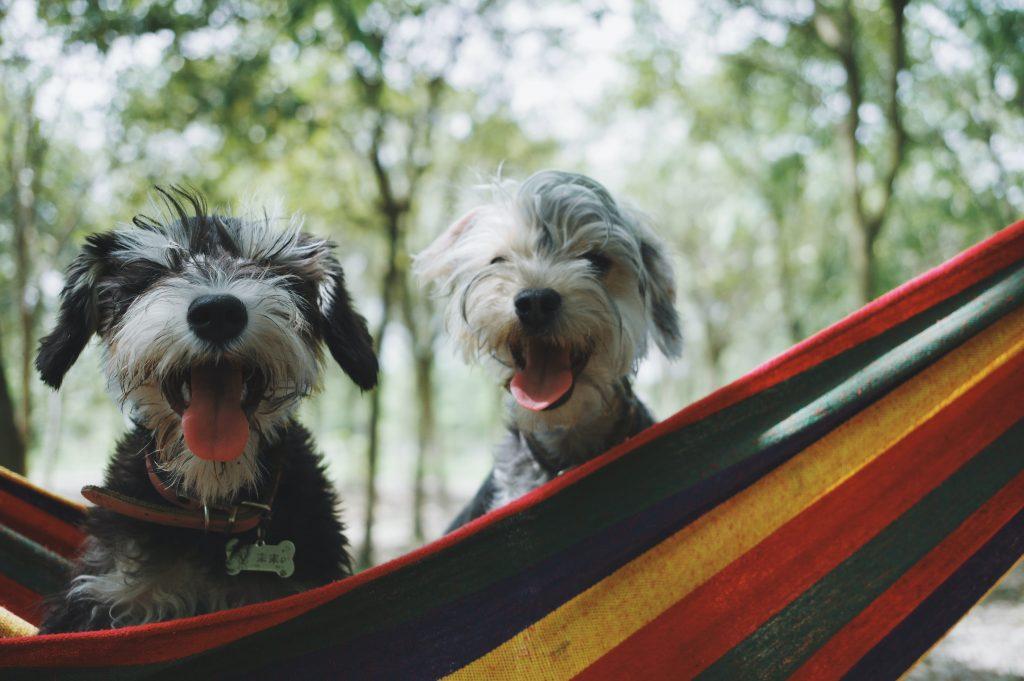 jak przyzwyczaić psa do nowego domu i naszego życia