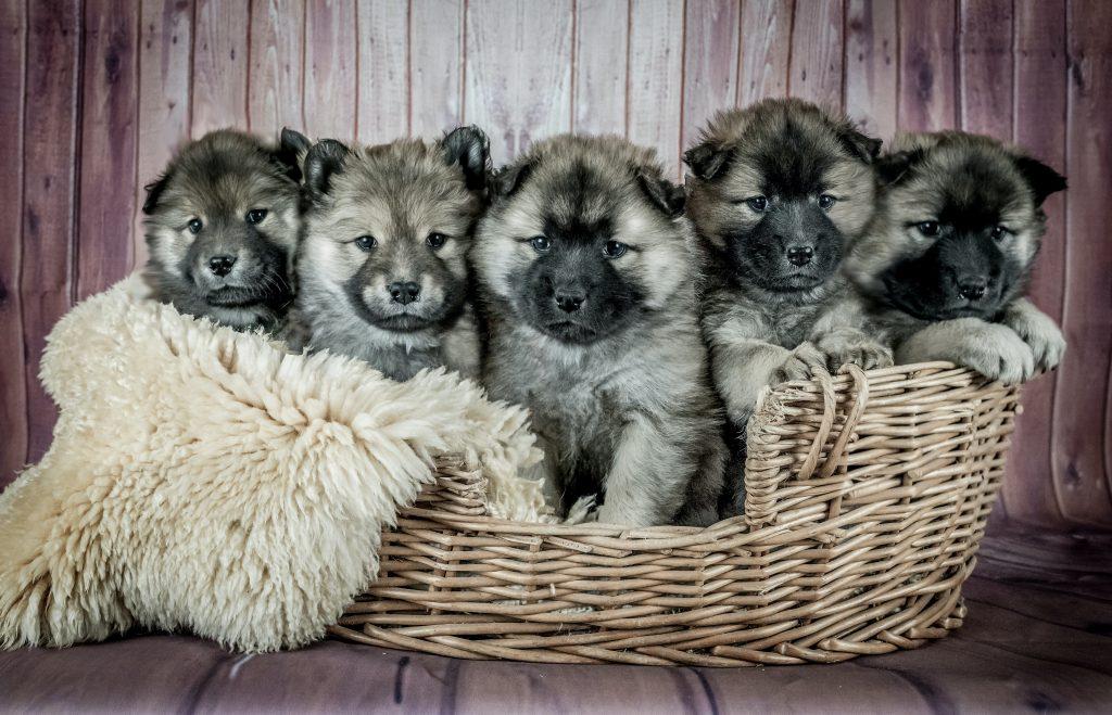 jak przyzwyczaić psa do nowego domu szczeniak