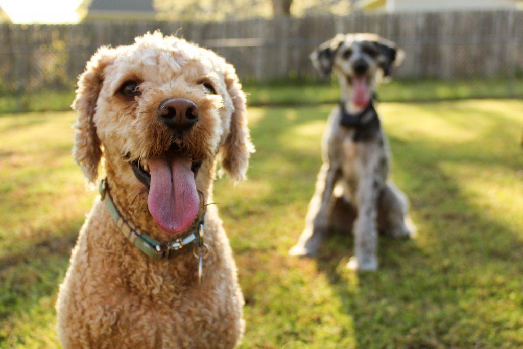 jak przyzwyczaić psa do nowego domu pies