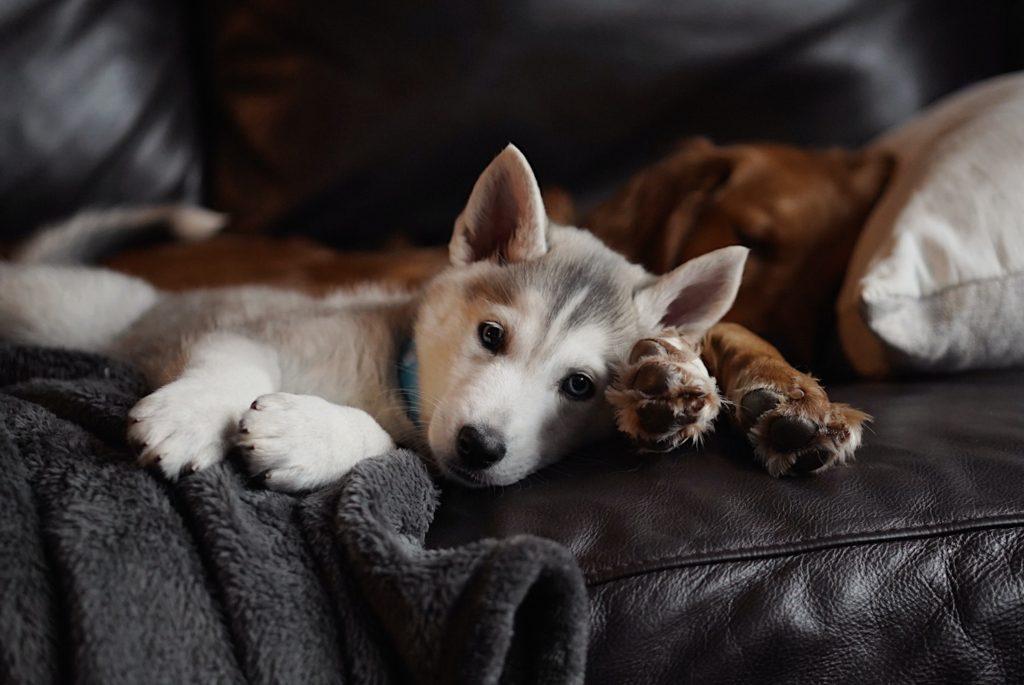 jak przyzwyczaić psa do nowego domu i trybu życia