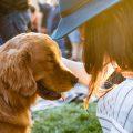 padaczka u psa